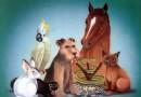 Refranes de animales y cosas con su significado