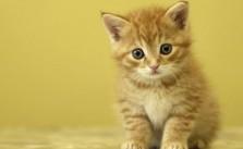 Rompe Cabezas y Puzzles Online sobre animales