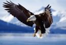 Puzzles y Rompe Cabezas sobre animales El Águila