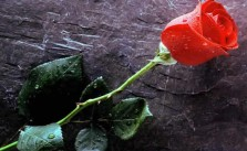No hay rosa sin espinas Refranes