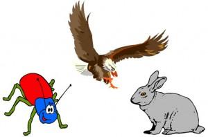 El águila, la liebre y el escarabajo Fábula clásica con Moraleja