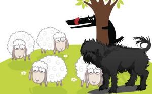 Los lobos, los carneros y el carnero mayor