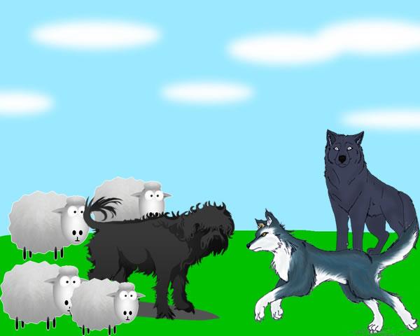 Los lobos y los carneros.