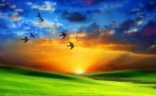 A quien madruga Dios le ayuda. Refranes con su significado