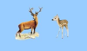 El ciervo y el cervatillo. Fábula clásica de Esopo con moraleja
