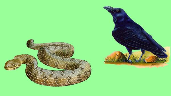 El cuervo y la culebra. Fábula clásica de Esopo con moraleja