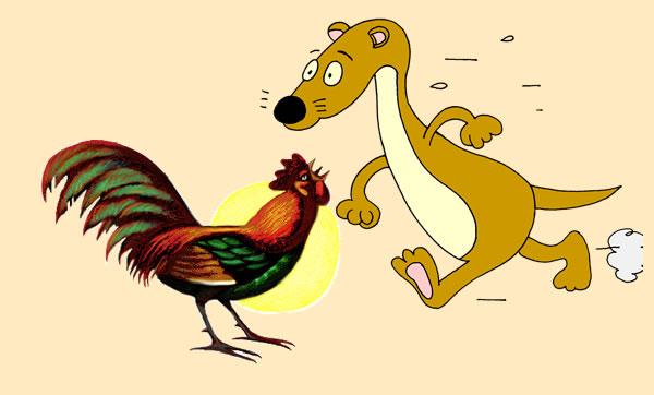 El gallo y la comadreja. Fábula clásica de Esopo con moraleja