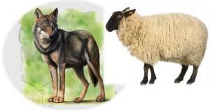 El lobo herido y la oveja. Fábula clásica de Esopo con moraleja