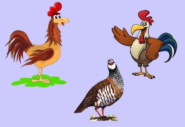Los gallos y la perdiz. Fábula clásica de Esopo con moraleja