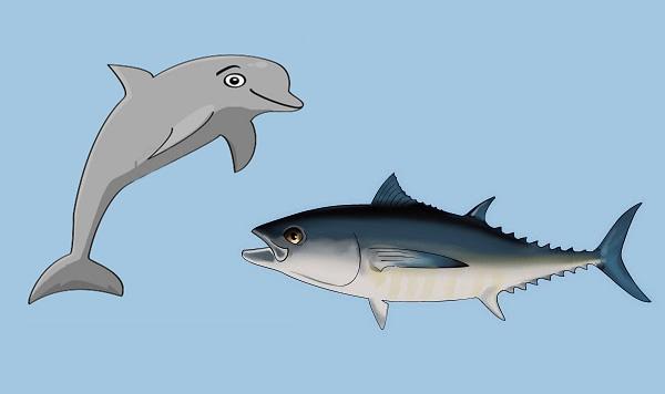 El atún y el delfín