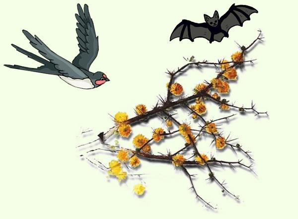 La gaviota, el espino y el murciélago. Fábula clásica de Esopo con moraleja