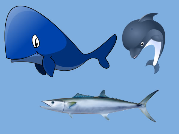 Los delfines, la ballena y la caballa