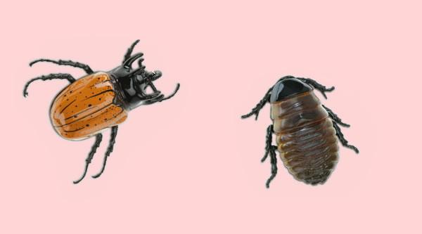 Los dos escarabajos