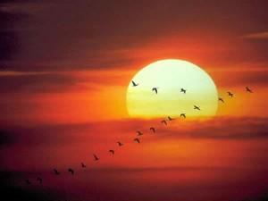 El Sol ¿cuál es su edad, porque brilla, que tan caliente es, que son las manchas solares…?